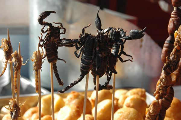 Image result for scorpions street food